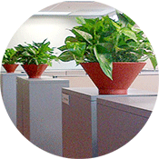 why-plants-in-the-office