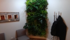 Living wall in a reception area in Oakville Ontario