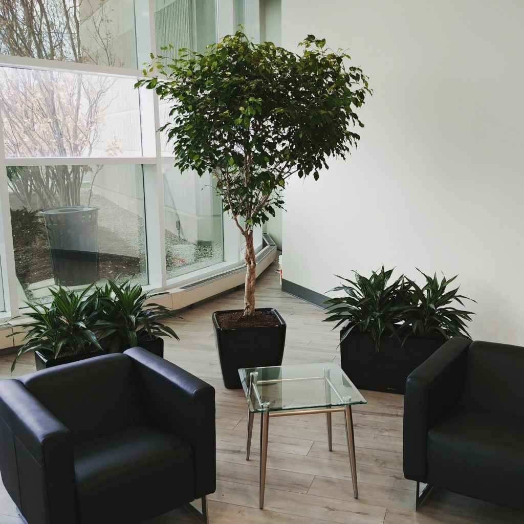 Potted indoor plants, office reception area